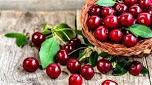 经常吃樱桃能够延缓衰老,让你保持青春年轻的状态。